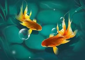 鱼和水的故事